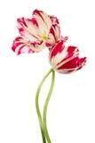 Dans van bloemen Royalty-vrije Stock Afbeeldingen