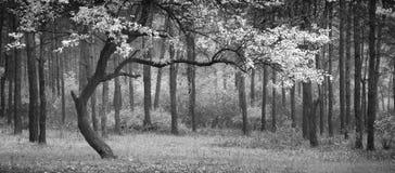 Dans van de herfst Zwart-wit kleuren stock afbeelding