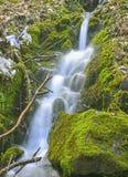 Dansa vatten i vildmarken Royaltyfri Fotografi
