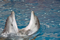 dansdelfiner två Arkivfoto