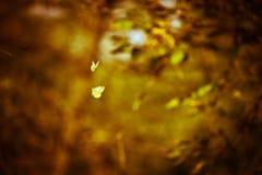 Danse d'amour des papillons Photographie stock libre de droits