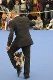 Danse de chien Photographie stock