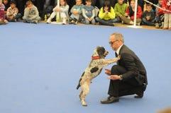 Danse de chien Photographie stock libre de droits