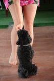 Danse de chien Image stock
