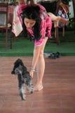 Danse de chien Images libres de droits