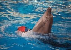 Danse de dauphin avec la boule Image libre de droits