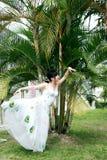 Danse de paon Photo stock