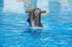 Danse des dauphins Photo libre de droits
