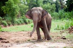 Dansen för den asiatiska elefanten är joyfully Royaltyfri Foto