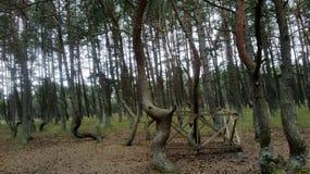 Dansend Bos op het Curonian-Spit in Kaliningrad Stock Fotografie