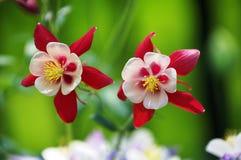 Dansende bloemen Stock Afbeelding