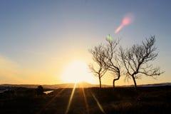 Dansende bomen Stock Foto's