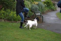 Danses avec des chiens image stock