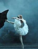 Danseur classique magnifique dans le lac swan Photos stock
