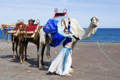 Danseur de ventre et train de chameau Photo stock