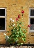 danska blommor Arkivbilder