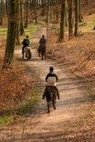 danska hästar Arkivbild