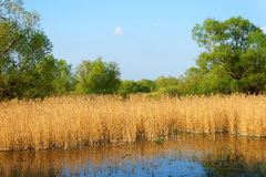 Danube Delta Royalty Free Stock Photos