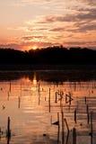 Danube Delta. Beautiful sunrise landscape from the Danube Delta Biosphere Reserve in Romania royalty free stock photography