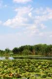 Danube Delta royalty free stock photography