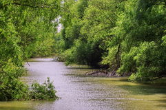 Danube River. Landscape in natural reserve of the Danube Delta - landmark attraction in Romania. Danube River. Beautiful landscape from the natural reserve of stock photos
