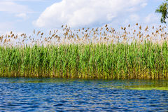 Danube Delta. Blue water and sky royalty free stock photo