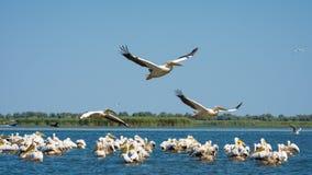Danube delta - Europejski podróży miejsce przeznaczenia zdjęcie stock