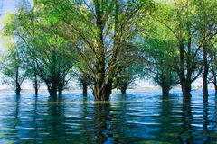 Free Danube Delta Flooded Forest Royalty Free Stock Image - 9347566