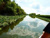 Danube Delta. Great boat view of vegetation and water lillies Stock Photography