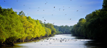 Free Danube Delta Landscape Royalty Free Stock Photo - 19534705