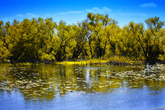 Danube Delta Landscape. With trees reflection Royalty Free Stock Photography