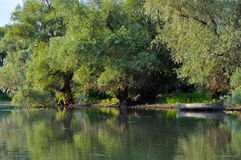 Danube Delta landscape. With trees royalty free stock photos