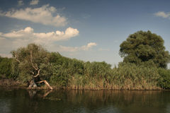 Danube Delta landscape Stock Image