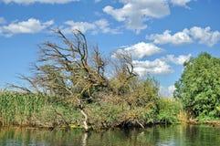 Danube Delta Stock Photography