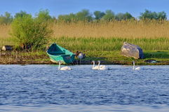 Danube Delta Royalty Free Stock Image