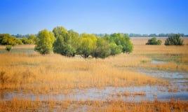 Danube Delta Landscape royalty free stock photo