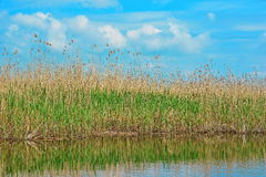 Danube Delta reed view Stock Photo