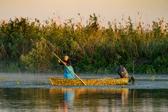 Danube Delta, Romania, August 2017: Fisherman Catching Fish At S Stock Photography