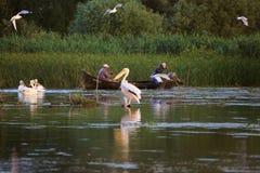Fishermen checking nets at dawn in Danube Delta. Danube Delta, Romania - June 16, 2019: Fishermen checking nets at dawn in Danube Delta royalty free stock photography