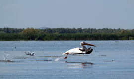 Danube Delta, Romania stock images
