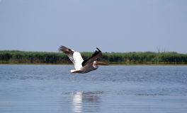 Danube Delta, Romania Royalty Free Stock Photos