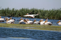 Danube Delta, Romania Stock Photo