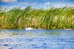 Danube Delta, Romania. Second largest river delta in Europe stock images