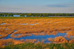 Danube Delta. Sunset with reed and water royalty free stock photo