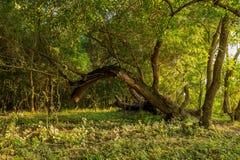 Danube delta untouched vegetation. Photo from Danube Delta, Romania stock photography
