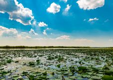 Danube Delta Vegetation and wildlife. Scenery from the wilderness of Danube Delta, blue sky, vegetation and wildlife, raw nature stock images
