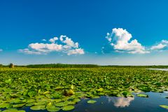 Danube Delta Vegetation and wildlife. Scenery from the wilderness of Danube Delta, blue sky, vegetation and wildlife, raw nature stock photos