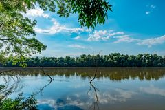 Danube Delta Vegetation and wildlife. Scenery from the wilderness of Danube Delta, blue sky, vegetation and wildlife, raw nature stock photography