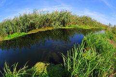 Danube delta water channel and vegetation Stock Image