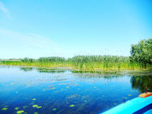Danube Delta. Water and vegetation from boat Stock Images